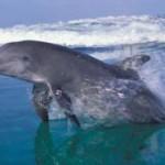 dolphin playing in the waves, south africa, kosi bay, beach, coastline, safari, africa, safari, boat trip