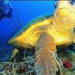 Leatherback turtle, south africa, kosi bay, kwazulu natal, african safari, marine animals, coastline, beach, mozambique
